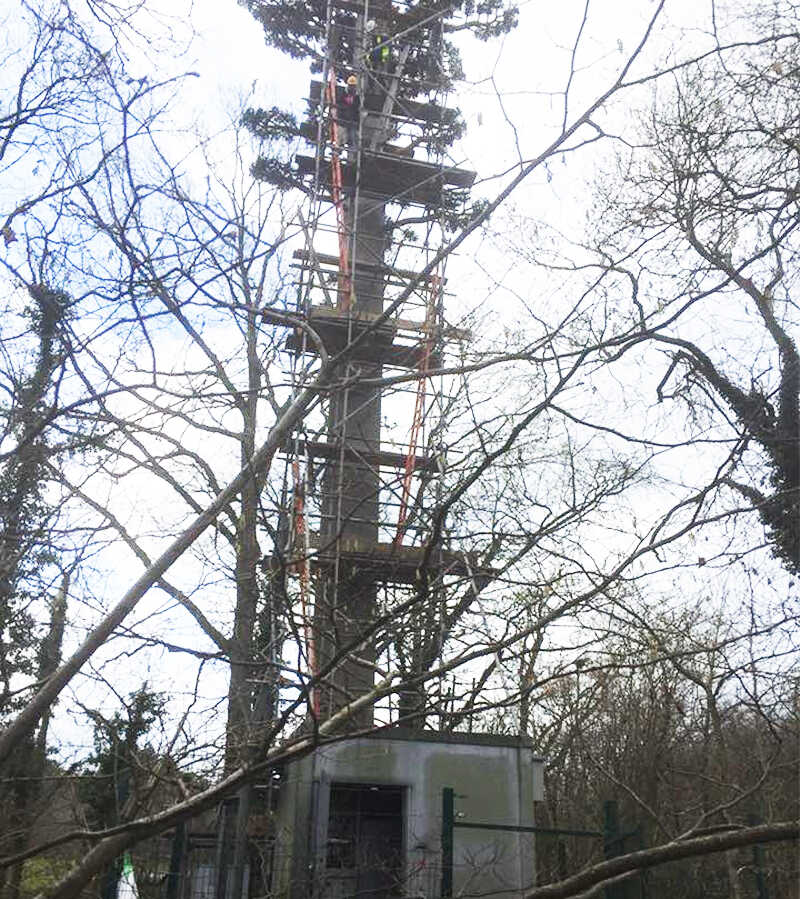 Telecommunication Scaffolding for camouflage towers Hampshire